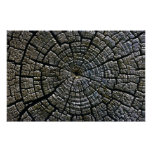 Weathered Tree Growth Rings Aztec Ruins Monument Poster