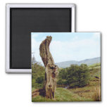 Weathered tree in UK Peak District Magnets