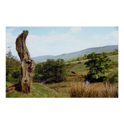 Weathered tree in UK Peak District Poster print