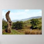Weathered tree in UK Peak District Poster