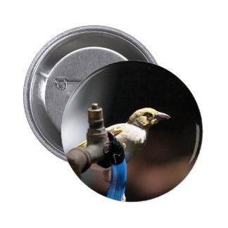 Weaver Bird 2 Inch Round Button