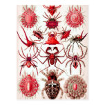 Web Crawlers Postcard