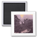 Web de araña abstracto imanes para frigoríficos