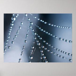 Web de araña con las gotitas impresiones
