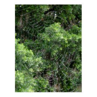 Web de araña cubierto de rocio postal