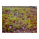Web de araña de perlas postales