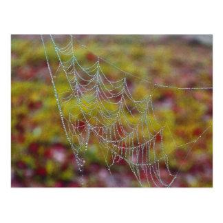 Web de araña de perlas tarjetas postales
