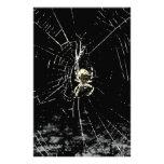 Web de araña en la medianoche papeleria de diseño