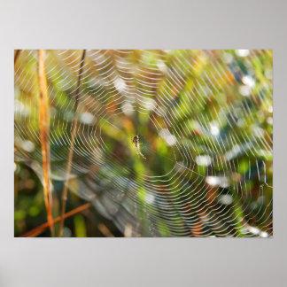 Web de araña impresiones