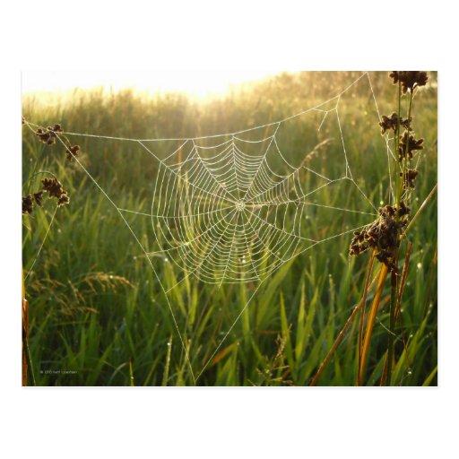 Web de araña perfecto tarjetas postales