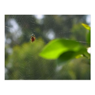 Web de araña postales