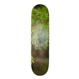 Web In Cedar Skateboard Deck