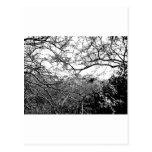 Web of Branches Postcard