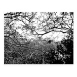 Web of Branches Postcards
