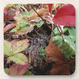 Web of Dewdrops; Merry Christmas Drink Coaster