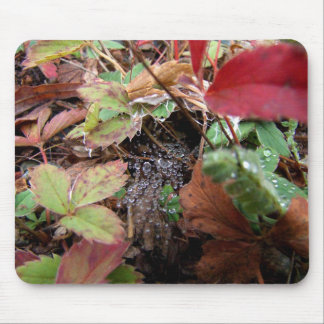 Web of Dewdrops Mouse Pad