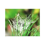 Web of Raindrops II Gallery Wrapped Canvas