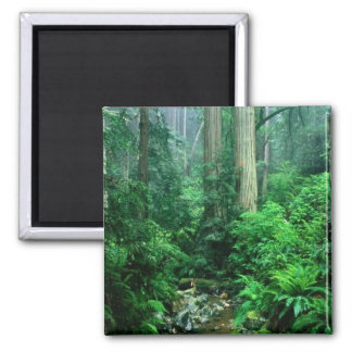 Webb Creek, CA Customizable Photo Gifts, Cards 2 Inch Square Magnet