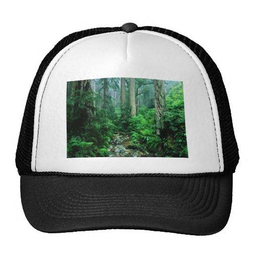 Webb Creek, CA Customizable Photo Gifts, Cards Hats