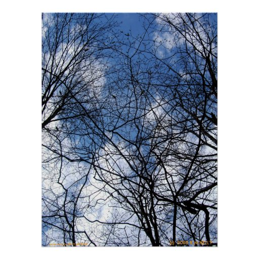 WEBBED SKY. POSTERS