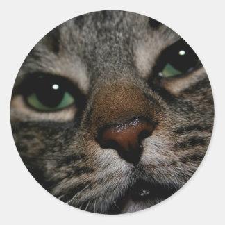 Webbies Sticker
