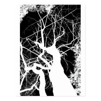 WEBBY TREE BLACK AND WHITE NEGATIVE POSTCARD