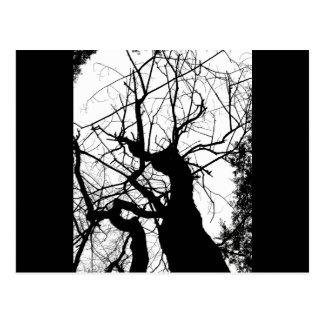 WEBBY TREE BLACK AND WHITE POSTCARD
