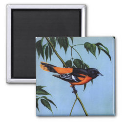 Square Magnet with Weber's Baltimore Oriole design