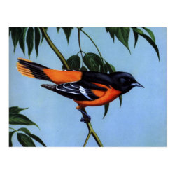 Postcard with Weber's Baltimore Oriole design