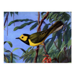 Postcard with Weber's Hooded Warbler design
