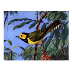 Postcard with Weber's Hooded Warbler design
