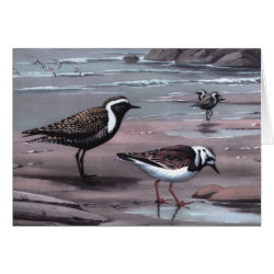 Greeting Card with Weber's Plovers & Turnstones design