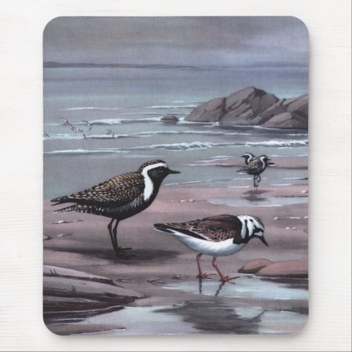 Weber's Plovers & Turnstones Mouse Pad