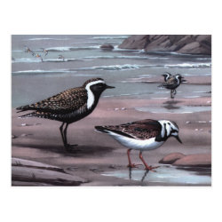 Postcard with Weber's Plovers & Turnstones design