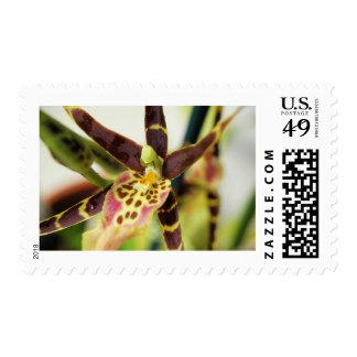 Webmaster II Postage Stamp