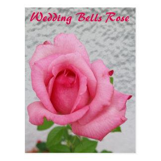 Wedding Bells Rose flower - snail mail postcard