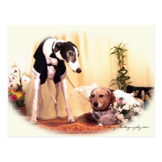 Wedding dogs postcard