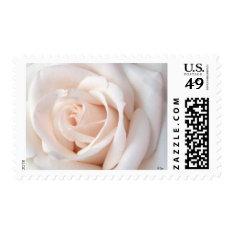 Wedding Rose Postage at Zazzle