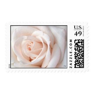Wedding Rose, S Cyr Stamp