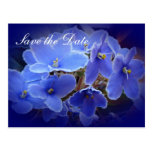 "Wedding ""Save the Date"" Blue African Violets Post Cards"
