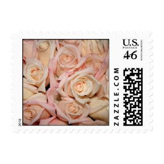 Wedding White Pink Rose Postage Stamps