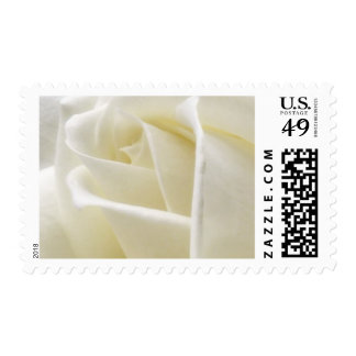 Wedding White Rose Postage