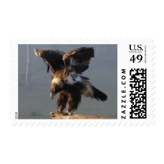 Wedge Tailed Eagle - Stamp