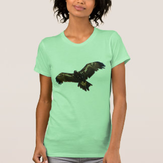 Wedgetail Eagle Playera
