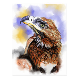 Wedgetailed Eagle Australian Bird Postcard