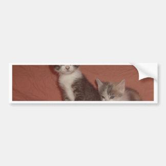 Wee Kitties Car Bumper Sticker