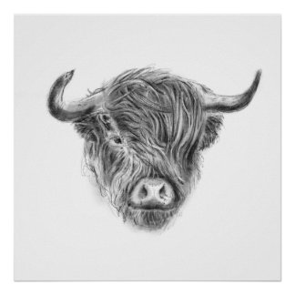 Wee Straggly Highland Cow Poster