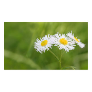 Weed daisy business card