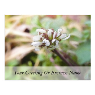Weed Flower - Bittercress Postcard