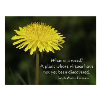Weed Quote from Ralph Waldo Emerson Poster